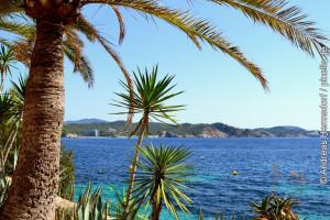 Mallorca Palmen am Wasser