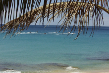Fuerteventura_Wasser_Palmen