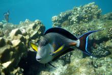 Aegypten-Fisch-unter-Wasser