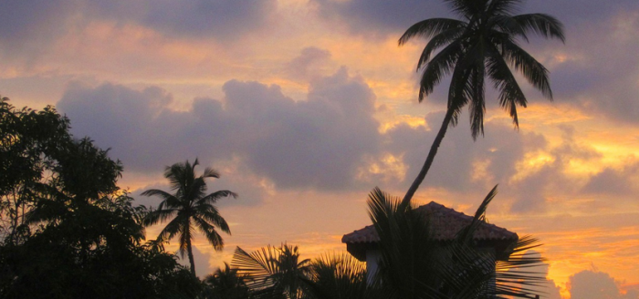 Sri-Lanka-Palmen-Sonnenuntergang