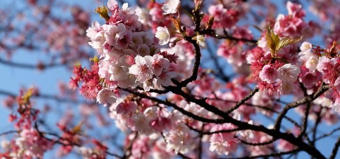 Blumen in Tokio pixabay