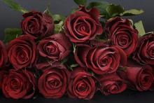 Rote-Rosen-Bachelor-Titelbild