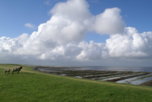 nordfriesland deich meer schafe