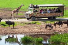 serengeti park tiere bus