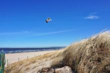 polnische ostsee strand meer